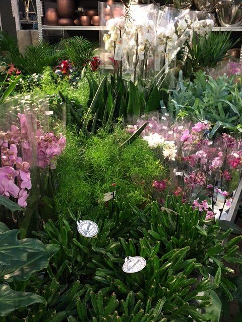 übertöpfe Für Zimmerpflanzen zimmerpflanzen übertöpfe gartenwelt bocholt
