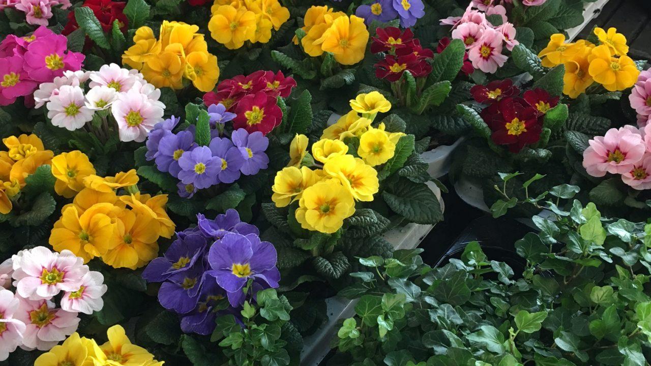 Frühling liegt in der Luft…