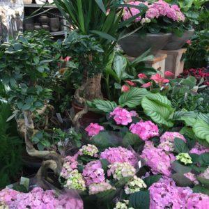 Zimmerpflanzen & Übertöpfe