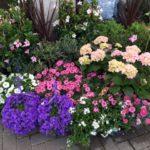 Sommer, Sonne, Garten und mehr…