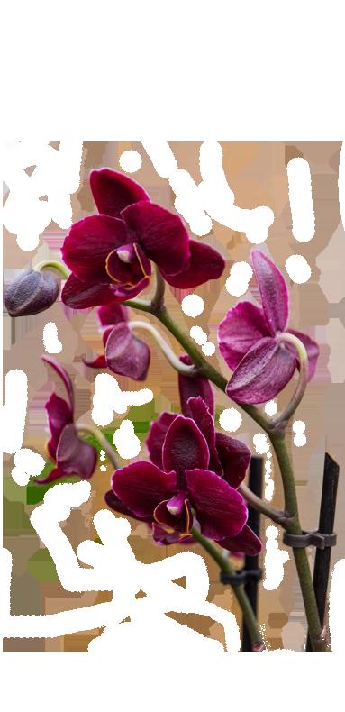 GartenWelt Bocholt Zimmerpflanzen